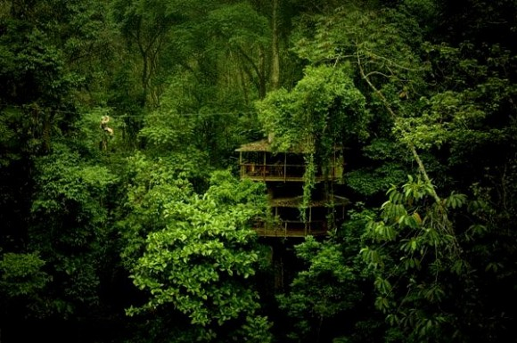 Finca-Bellavista-Treehouse-Community